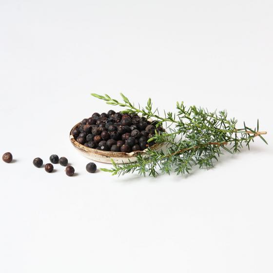 BIO Kräuterpflanze Grill-Wacholder, im ca. 12 cm-Topf | #2