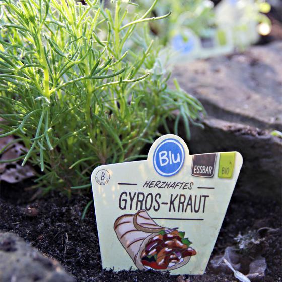 BIO Kräuterpflanze Gyros-Kraut, im ca. 12 cm-Topf | #2