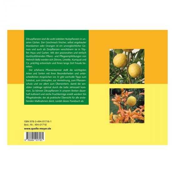 Zitruspflanzen  Erfolgreiche Anzucht und Pflege | #2
