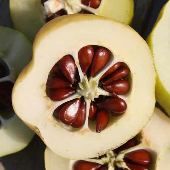 BIO Zitruspflanze Nordische Zitrone, im ca. 12 cm-Topf | #2