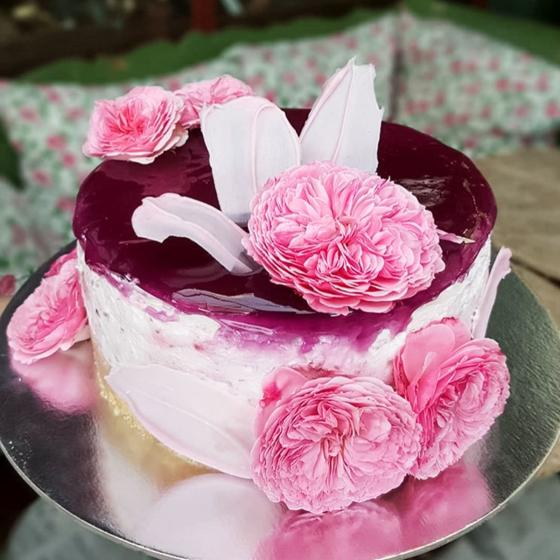 Essbare Culinaric Rose, rosa-apricot, im ca. 22 cm-Topf | #2