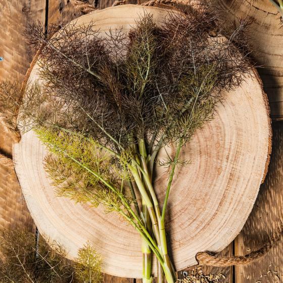 Bronzefenchelpflanze Smokey, im ca. 12 cm-Topf | #2