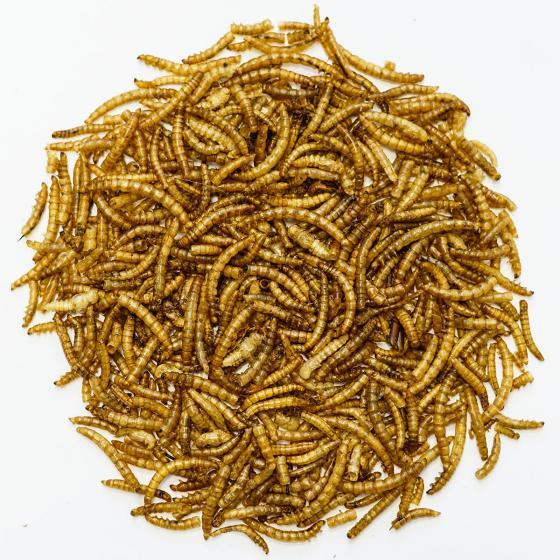 Getrocknete Mehlwürmer für Wildvögel, 250 g | #2