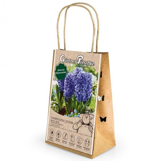 Gartenhyazinthe Delft Blue | #2