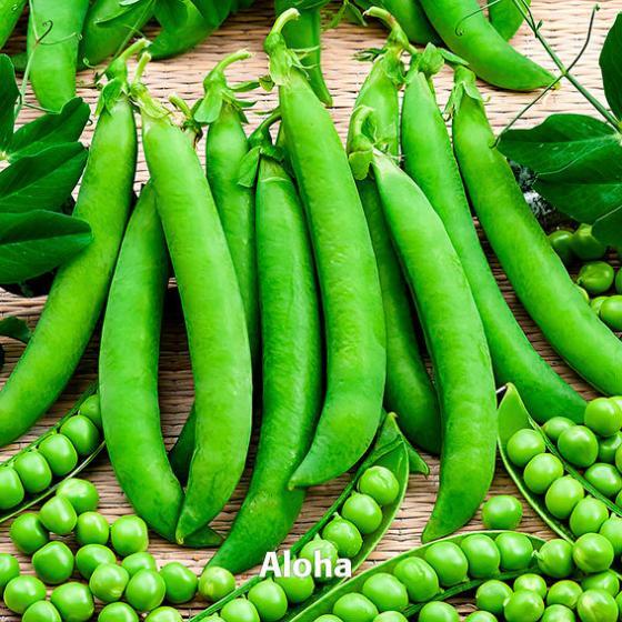 Gemüsesamen-Set Markerbsen Aloha und Flavora | #2