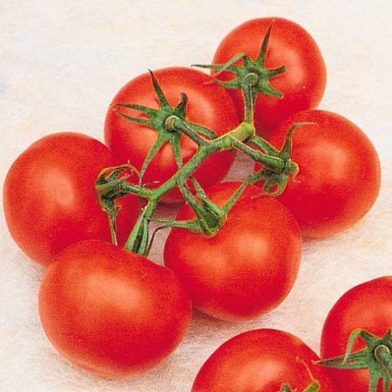Gärtner Pötschke Pflanzenfutter für Tomaten, 5 kg | #2