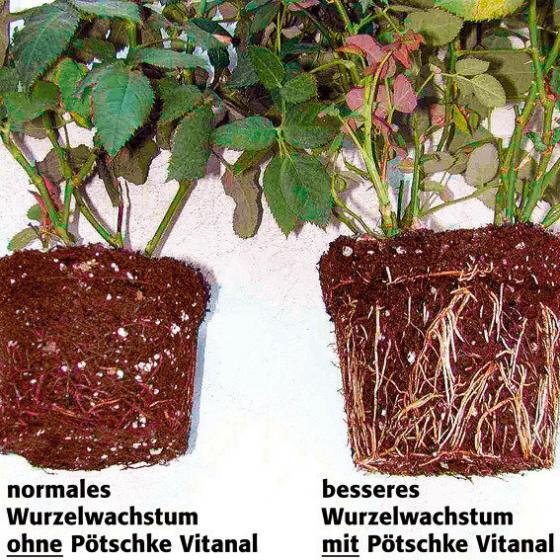 Gärtner Pötschke Vitanal Wachstumsstarter, 1 Liter | #2