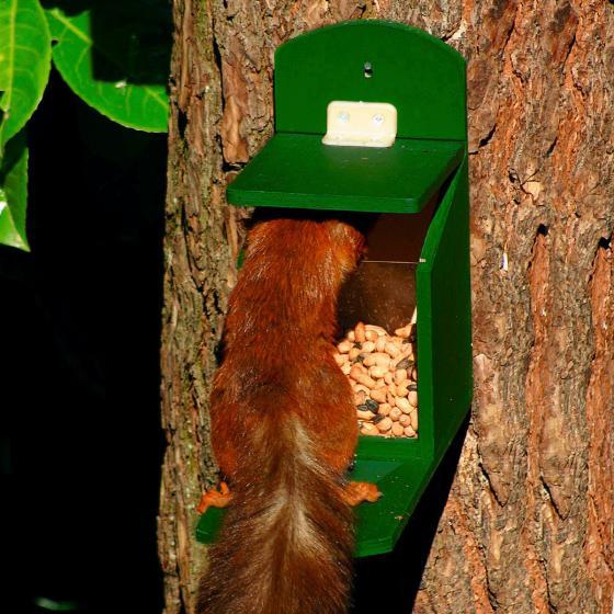 Eichhörnchen Futterautomat | #2