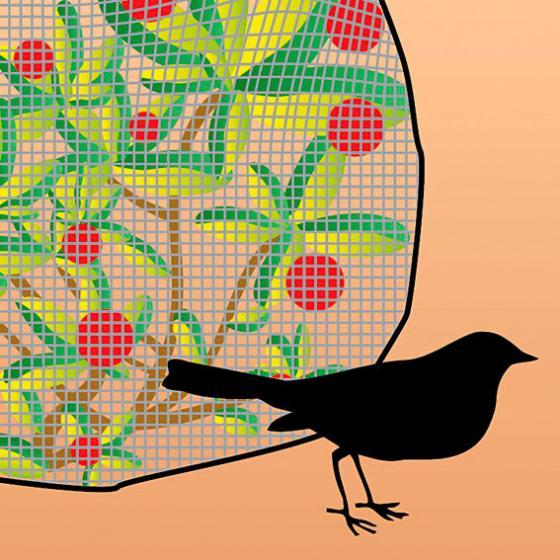 Vogelschutznetz fein, 5 x 2 Meter | #2