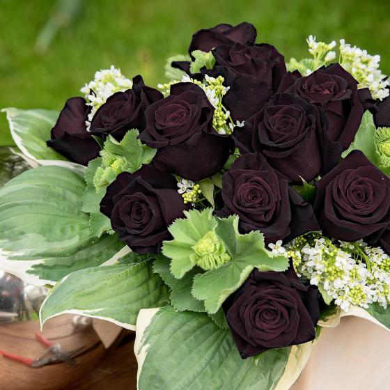 Edelrose Black Baccara®, im ca. 17 cm-Einpflanz-Topf | #2