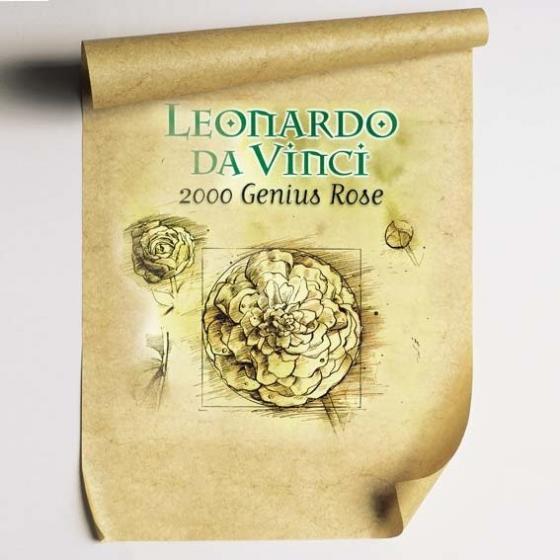 Rose Leonardo da Vinci® | #2