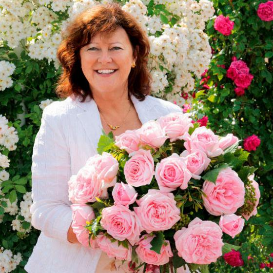 Rose Meister-Rose® Gärtner Pötschkes Jubilee, im 5-Liter-Topf | #2