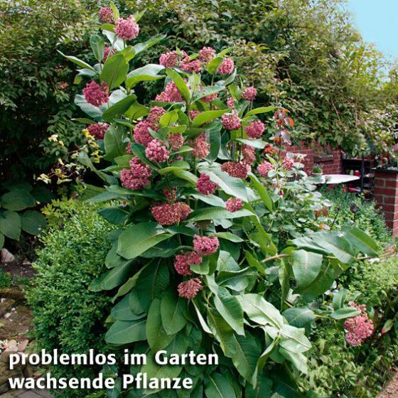 Papageien-Blume | #2