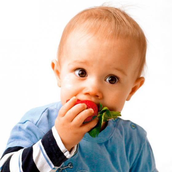 Erdbeerpflanze Sweet Mary®, getopft | #2