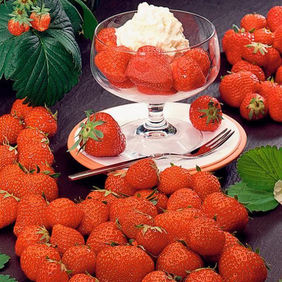 Erdbeerpflanze Senga® Sengana®, ungetopft | #2
