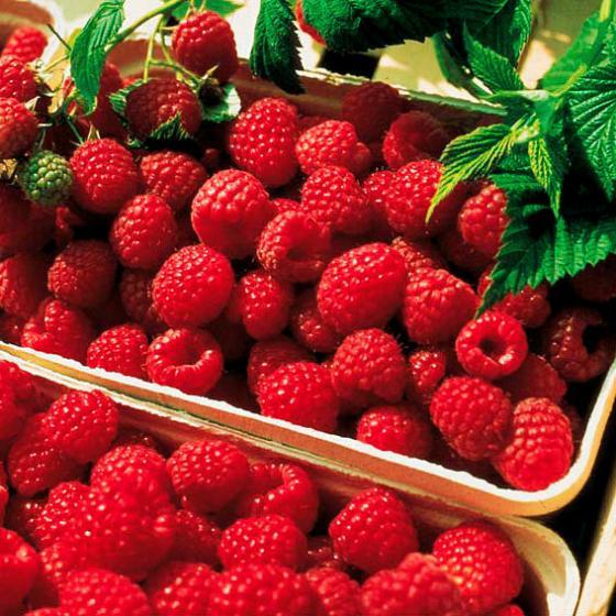 Obst-Sortiment Köstliche Himbeeren | #2