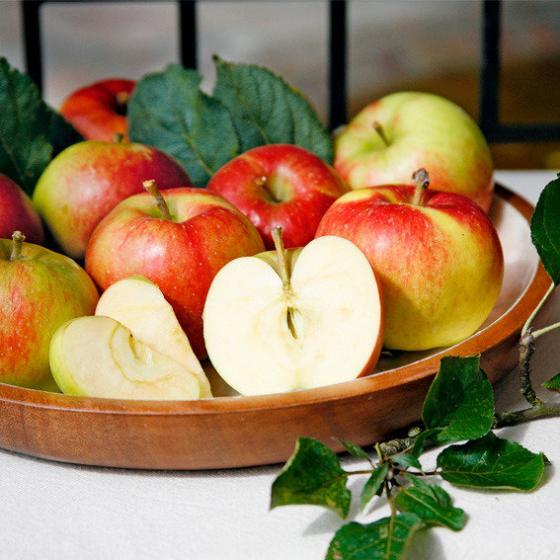 Apfel Santana(S), Basic | #2