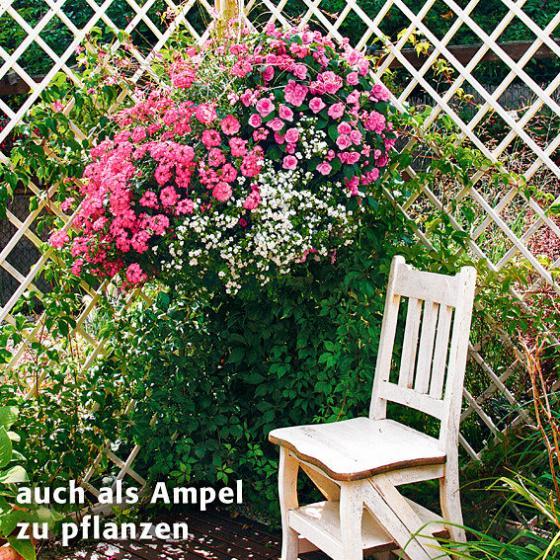 Sommerblumen-Sortiment Pink Paradise | #2
