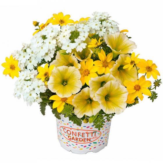 Trio-Fix Confetti Garden Sunshine   #2