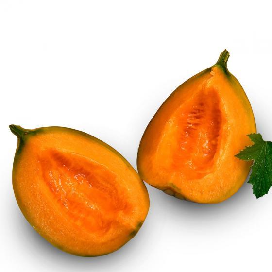 Zuckermelonenpflanze Stellio F1, veredelt, im ca. 10,5 cm-Topf | #2