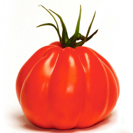 Tomatenpflanze Corazon F1, veredelt | #2