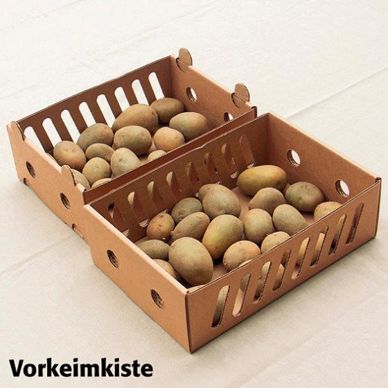 Kartoffel Sieglinde, 2,5 kg inkl. Vorkeimkiste | #2