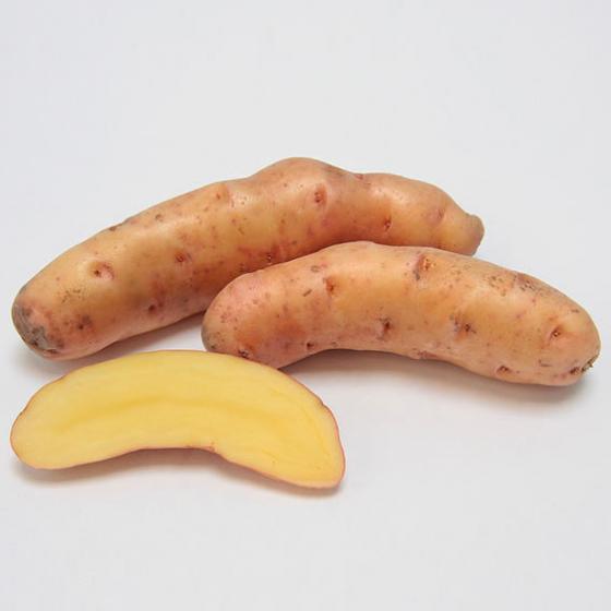 Kartoffel Bamberger Hörnchen, 1 kg | #2