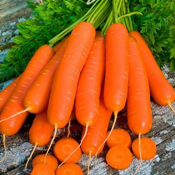 Gemüsesamen-Sortiment Gartenmöhren | #3