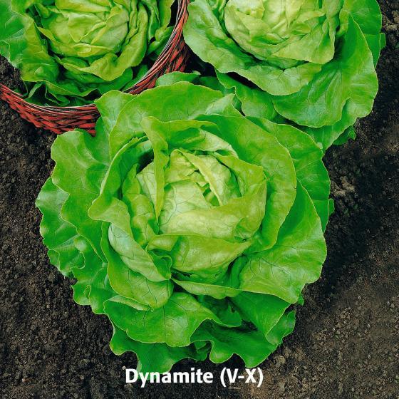 Gemüsesamen-Set Kopfsalate | #3