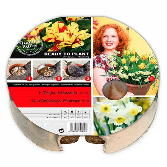 Pflanz-Tray Ready to Plant Tulpen und Narzissen | #3
