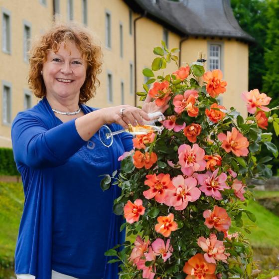 Rose Gärtner Pötschkes Orange Eyeconic®, im 3-Liter-Topf | #3