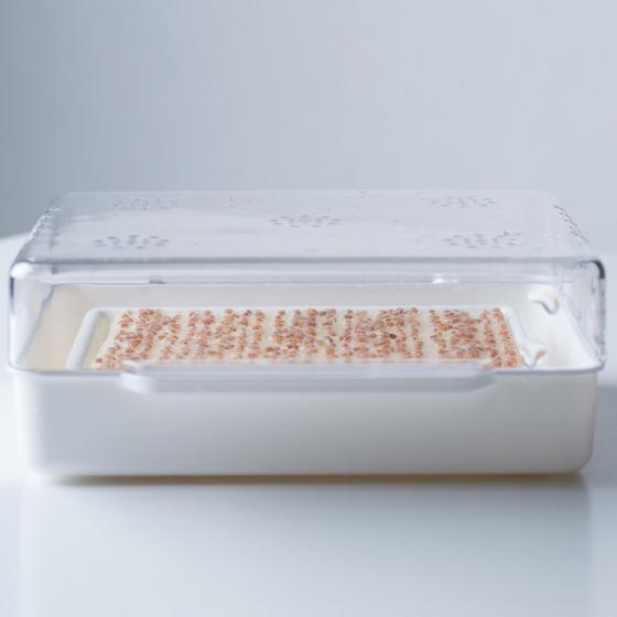 Cressbar Starter-Kit zur Kresseanzucht | #3
