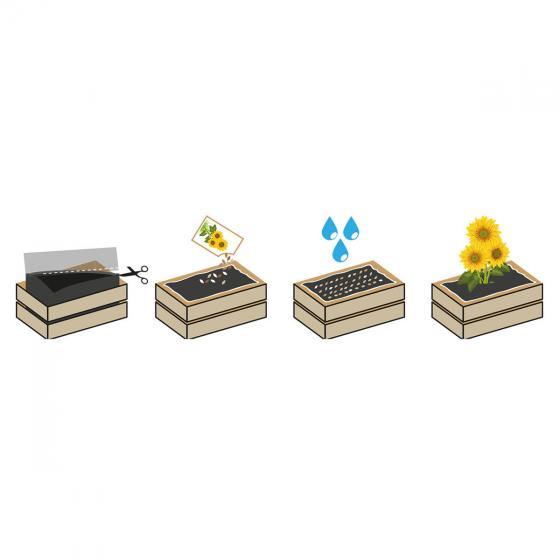 Mini-Garten-Kiste mit Mini-Sonnenblumensamen | #3