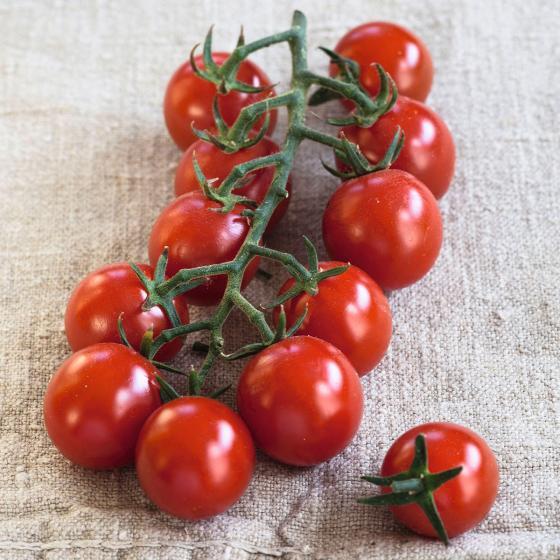 Tomatenpflanze Solena Sweet Red, veredelt, im ca. 12 cm-Topf | #3