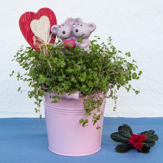 Duo-Bubikopf im rosa und weißem Zinktopf | #3