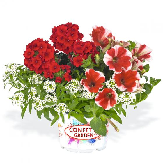 Confetti Garden™ Glossy Strawberry | #3