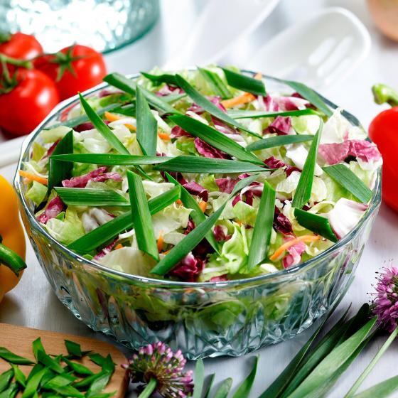 BIO Kräuterpflanze Gartenknofi | #3