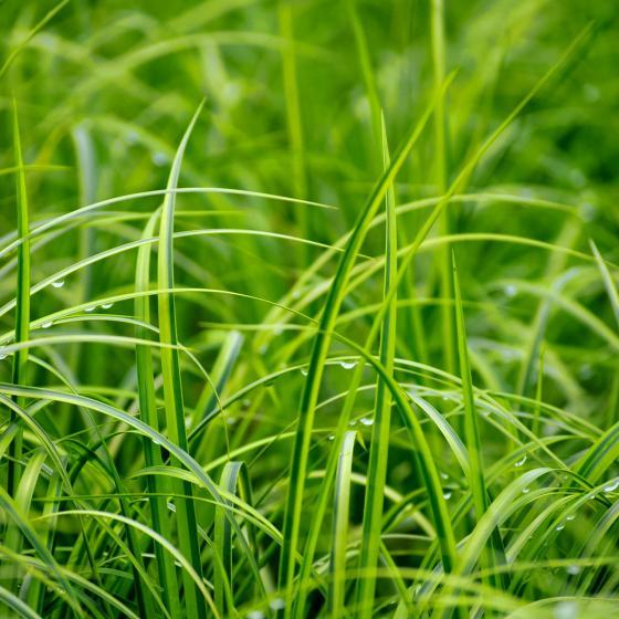 Miniteich-Wanne Zinkoptik, ca. 30 cm mit 4 Wasserpflanzen | #3