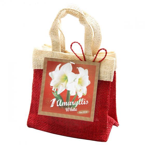 Amaryllis weiß, im Weihnachts-Jutesäckchen | #3