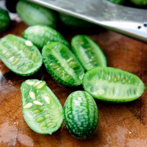 Mini-Jungpflanze Mexikanische Minigurke | #3