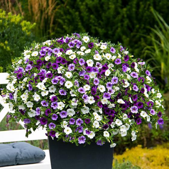 Zauberglöckchen Trixi® Shades of Blue - Blumenampel | #3