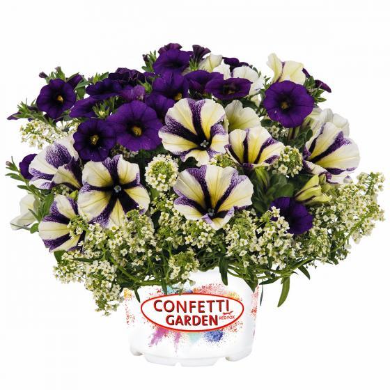 Confetti  Garden™ Glossy Vanilla Muffin | #3