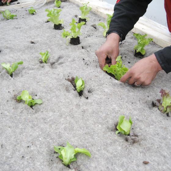 Unkrautschutzmatte für Gemüsebeete aus Schafwolle | #3