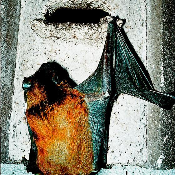 SCHWEGLER Fledermaushöhle 2F universal, 16 x 16 x 33 cm, Holzbeton, braun | #3