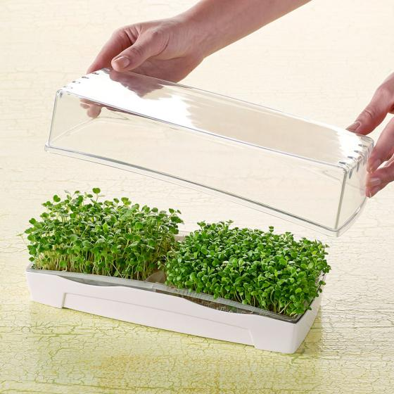 MicroGreen Duo-Garden Anzucht-Set inkl. 2 Pads & 1 Port. Saatgut | #3