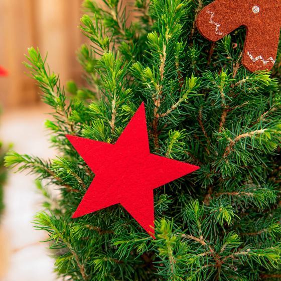 Geschmückte Zuckerhutfichte Wintertraum, klein | #3