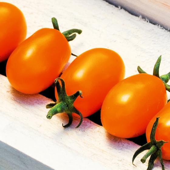 Tomatenpflanze Mirado orange, veredelt | #3