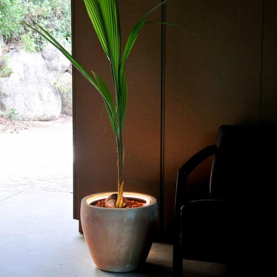 Leuchtring, Ø 52 cm | #3