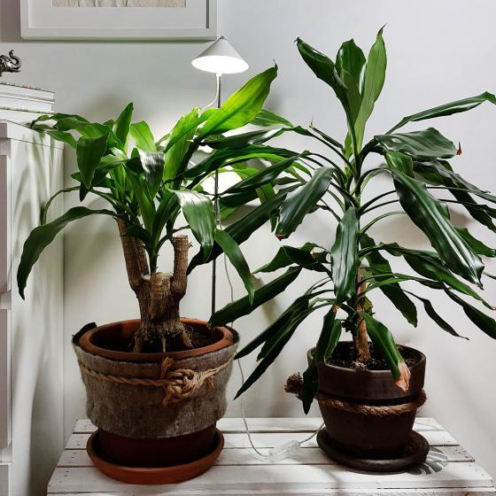 Sunlite Pflanzenlampe, 7 W, 28-100 cm, Ø 11, Kabel 4 m,Aluminium, weiß | #3