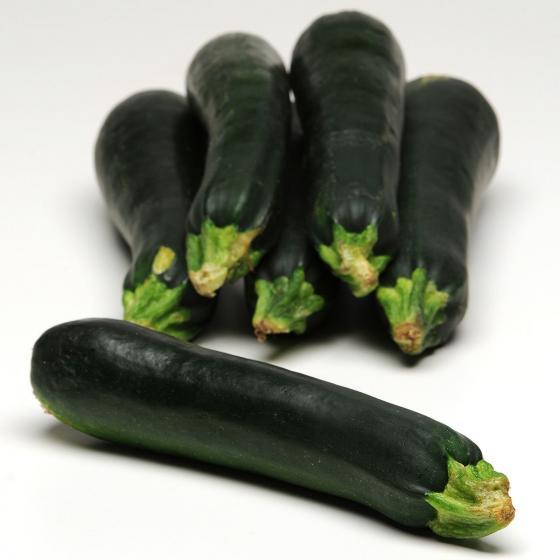 BIO Gemüsepflanze Balkon-Zucchini, im ca. 12 cm-Topf | #3